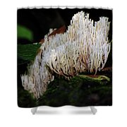 Coral Mushroom 2 Shower Curtain