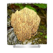 Coral Mushroom Shower Curtain