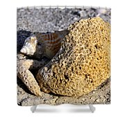 Coral On Shore Shower Curtain