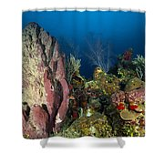 Coral Reef And Sponges, Belize Shower Curtain