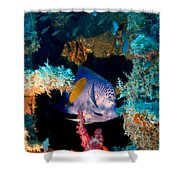Coral Reef In Red Sea Shower Curtain