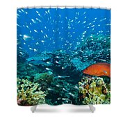 Coral Reef In Thailand Shower Curtain