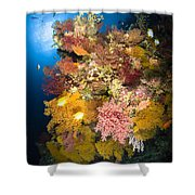 Coral Reef Seascape, Australia Shower Curtain