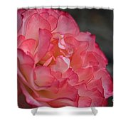 Coral Ruffles Shower Curtain