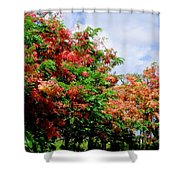 Coral Shower Trees Shower Curtain