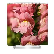 Coral Snapdragons Shower Curtain