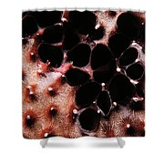 Coral Sponge 1 Shower Curtain