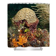 Coral Top Knot Shower Curtain