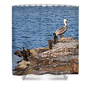 Cormorants And Pelican Shower Curtain