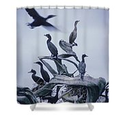 Cormorants Fly Above Driftwood, Grey Shower Curtain by Leanna Rathkelly
