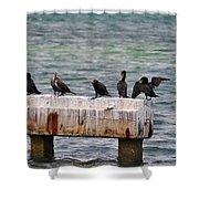 Cormorants Key West Shower Curtain