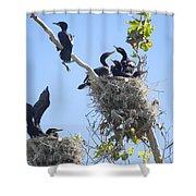 Cormorants Nesting Shower Curtain
