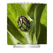 Cornflower Bud Shower Curtain