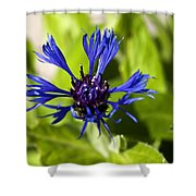 Cornflower Shower Curtain