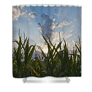 Cornlight Shower Curtain