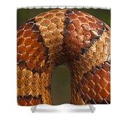 Cornsnake Elaphe Guttata Scale Pattern Shower Curtain