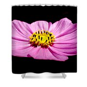 Cosmia Pink Flower Shower Curtain
