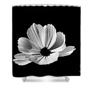 Cosmo Black And White Shower Curtain