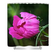 Cosmos Coming Soon Shower Curtain