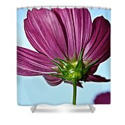 Cosmos Skies Shower Curtain