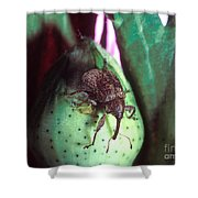 Cotton Boll Weevil Shower Curtain
