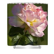 Cotton Candy Pink Peace Rose Shower Curtain