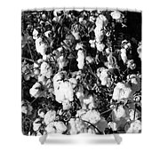 Cotton Classic B And W Shower Curtain