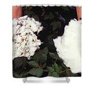 Cotton Comparison Shower Curtain