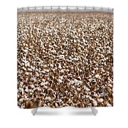 Cotton Forever Shower Curtain