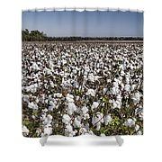 Cotton In Limestone County Shower Curtain