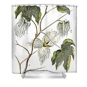 Cotton Plant, 1796 Shower Curtain