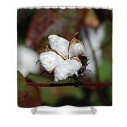 Cotton Pod 3 Shower Curtain