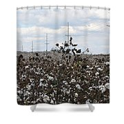 Cotton Ready For Harvest In Alabama Shower Curtain