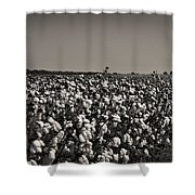 Cotton The Heart Of Dixie Shower Curtain