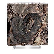 Cottonmouth Shower Curtain