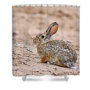 Cottontail Bunny Shower Curtain