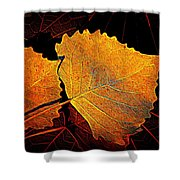Cottonwood   Shower Curtain by Chris Berry