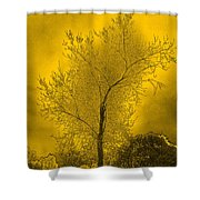 Cottonwood Tree April 2012 In Gold Shower Curtain