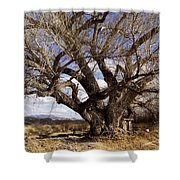 Cottonwood Tree At San Pedro House Shower Curtain