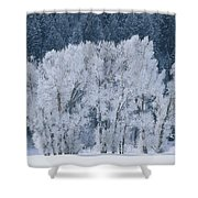Cottonwood Trees With Frost Shower Curtain
