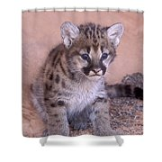 Cougar Kitten Shower Curtain