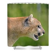 Cougar Profile Shower Curtain