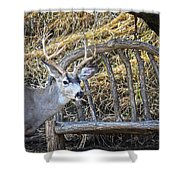Country Buck Shower Curtain