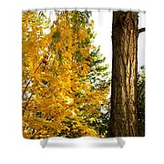 Country Color 19 Shower Curtain