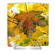 Country Color 21 Shower Curtain