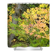 Country Color 23 Shower Curtain