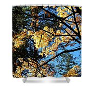 Country Color 25 Shower Curtain