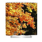 Country Color 26 Shower Curtain