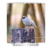 Country Quail Shower Curtain