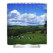 County Tipperary, Ireland, Dairy Cattle Shower Curtain